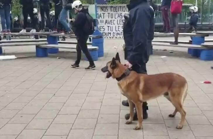 واسکت زردها 1 - تصاویر/ اعتراض واسکت زردها به دیکتاتوری اروپایی ضد مردمی
