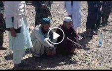ویدیو تیر باران سارق طالبان 226x145 - ویدیو/ تیر باران چند سارق توسط طالبان