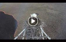 ویدیو مراقبت مادر فرزند دل آتش 226x145 - ویدیو/ مراقبت یک مادر از فرزندانش در دل آتش