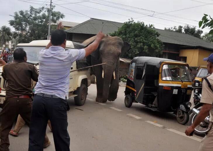 فیل وحشی - تصویر/ دویدن فیل وحشی در سرک های هند