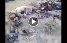 ویدیو اجساد طالبان پاکستان غزنی 226x145 - ویدیو/ اجساد قطعه سرخ طالبان و مزدوران پاکستان در غزنی