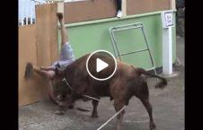 ویدیو حمله گاو پیرمرد هند 226x145 - ویدیو/ حمله گاو خشمگین به سمت پیرمرد هندی