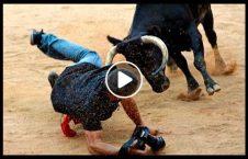 ویدیو کشته پیرمرد گاو مقدس 226x145 - ویدیو/ کشته شدن پیرمرد تنها توسط گاو مقدس!