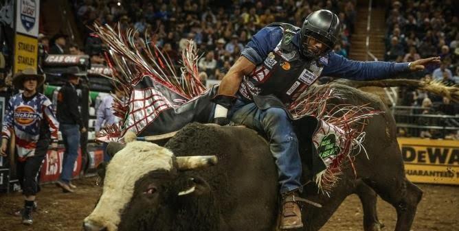 گاوسواری2 - به استقبال مرگ رفتن بخاطر جدال با گاوهای وحشی + تصاویر