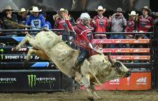 گاوسواری3 226x145 - به استقبال مرگ رفتن بخاطر جدال با گاوهای وحشی + تصاویر