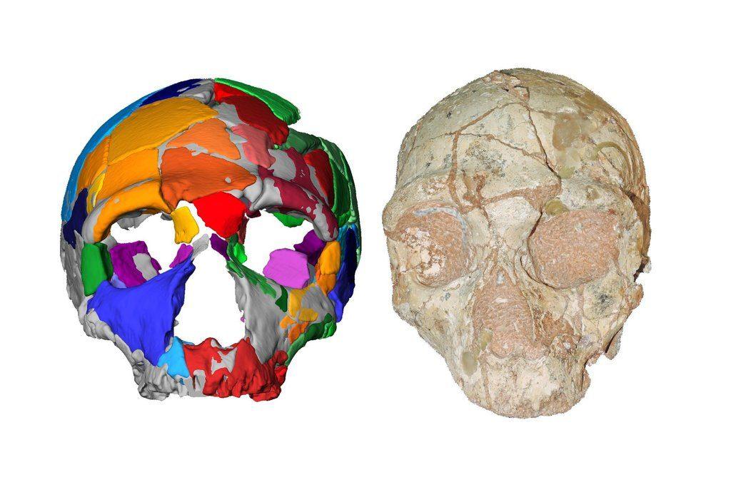 جمجمه 1024x683 - قدیمی ترین فسیل جمجمه انسان کشف شد