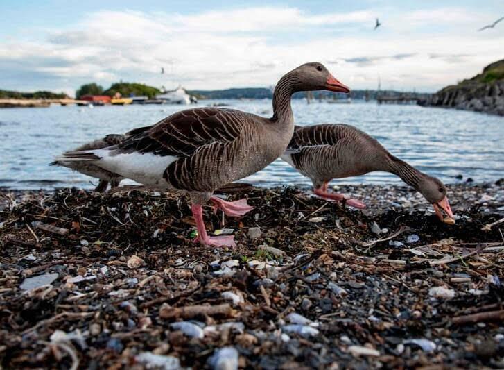 حیوانات19 - تصاویری جذاب از دنیای حیوانات