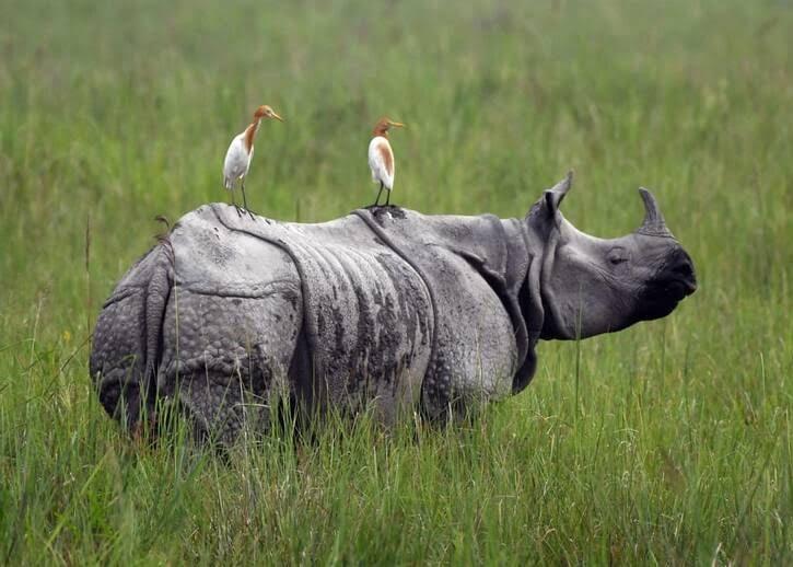 حیوانات3 - تصاویری جذاب از دنیای حیوانات