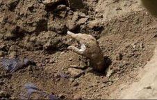 زنده به گور 226x145 - جوانی که از زنده به گورشدن نجات یافت