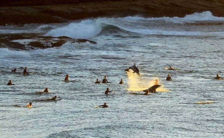 موج سواری9 - تصاویر/ موج سواری در سواحل آسترالیا