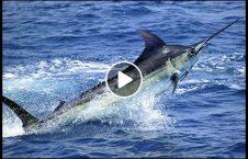 ویدیو وحشی گردشگر سواحل یونان 226x145 - ویدیویی از وحشیگری گردشگران در سواحل یونان