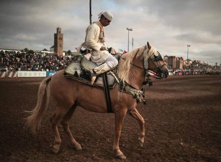 اسب5. - تصاویری دیدنی از جشنواره اسب سواری