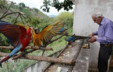 طوطی1 226x145 - تصاویر/ بهشتی زیبا برای طوطی ها