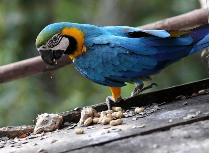 طوطی10 - تصاویر/ بهشتی زیبا برای طوطی ها