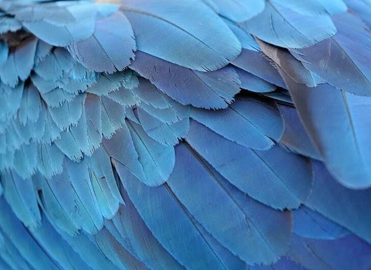 طوطی11 - تصاویر/ بهشتی زیبا برای طوطی ها