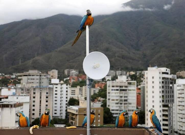 طوطی2 - تصاویر/ بهشتی زیبا برای طوطی ها