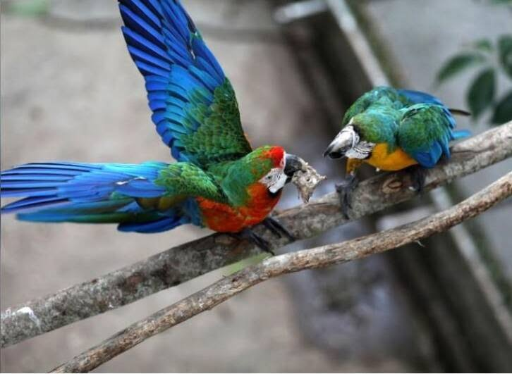 طوطی3 - تصاویر/ بهشتی زیبا برای طوطی ها