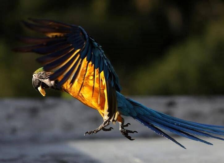 طوطی4 - تصاویر/ بهشتی زیبا برای طوطی ها