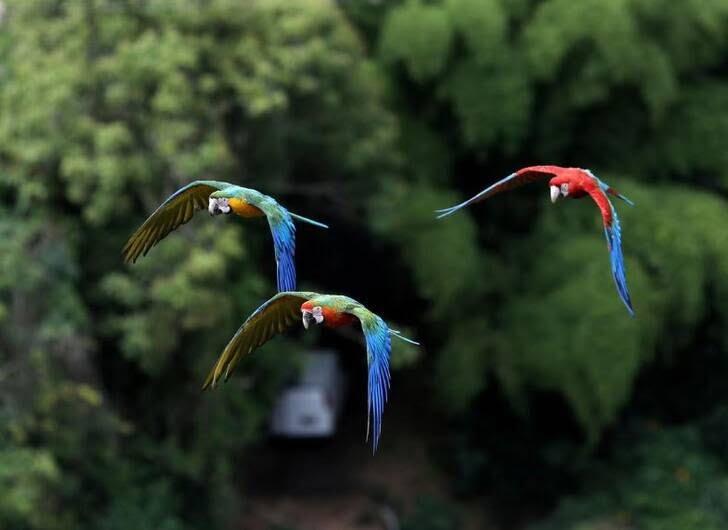 طوطی5 - تصاویر/ بهشتی زیبا برای طوطی ها