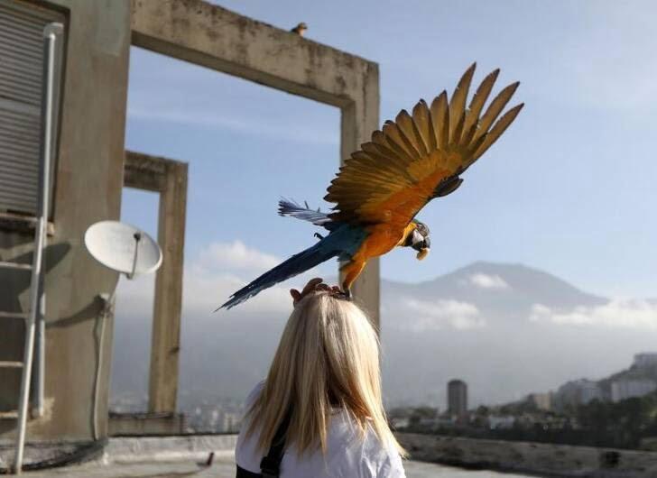 طوطی6 - تصاویر/ بهشتی زیبا برای طوطی ها
