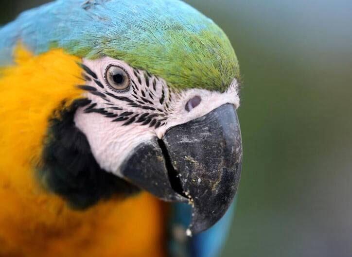 طوطی7 - تصاویر/ بهشتی زیبا برای طوطی ها