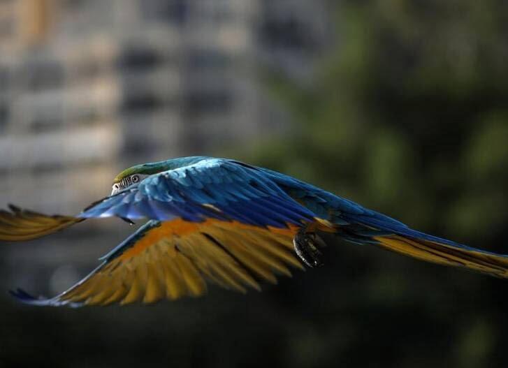 طوطی8 - تصاویر/ بهشتی زیبا برای طوطی ها