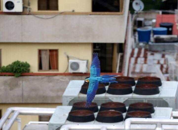 طوطی9 - تصاویر/ بهشتی زیبا برای طوطی ها
