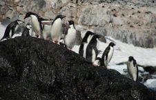 قطب جنوب 3 226x145 - تصاویری زیبا از قطب جنوب