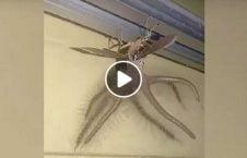 ویدیو موجود عجیب الخلقه اندونزیا 226x145 - ویدیو/ کشف یک موجود عجیب الخلقه در اندونزیا