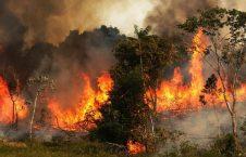 جنگل آتش 226x145 - اثرات مخرب آتش سوزی جنگلهای آمازون بر جو زمین