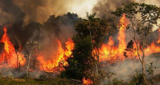 جنگل آتش 550x295 - اثرات مخرب آتش سوزی جنگلهای آمازون بر جو زمین