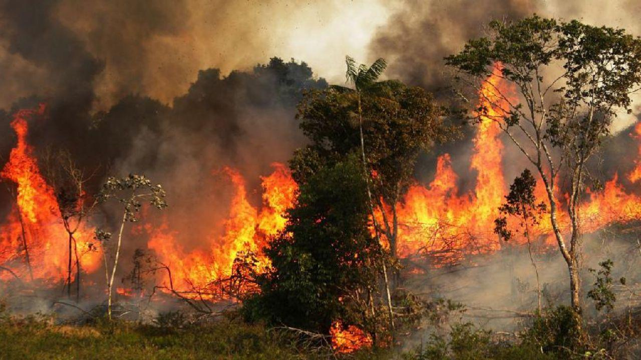 جنگل آتش - اثرات مخرب آتش سوزی جنگلهای آمازون بر جو زمین