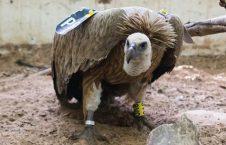 حیوان 226x145 - آموزش حیوانات به هدف جاسوسی توسط استخبارات ایالات متحده