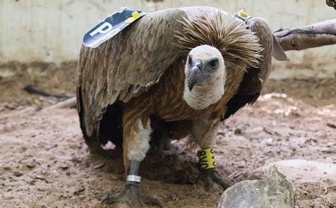 حیوان 476x295 - آموزش حیوانات به هدف جاسوسی توسط استخبارات ایالات متحده