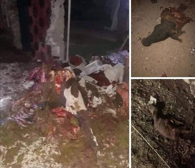 سلاح داعش 1 - سلاح جدید داعش! + تصاویر(18+)