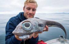 ماهی عجیب الخلقه 1 226x145 - صید ماهی عجیب الخلقه در سواحل ناروی + تصاویر