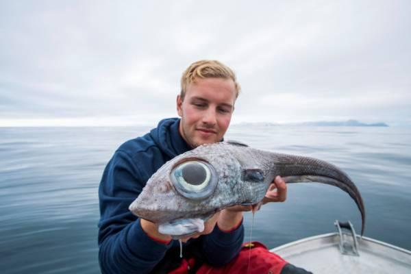 ماهی عجیب الخلقه - صید ماهی عجیب الخلقه در سواحل ناروی + تصاویر