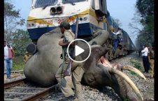 ویدیو دلخراش تصادف فیل قطار 226x145 - ویدیو/ صحنه دلخراش تصادف یک فیل با قطار