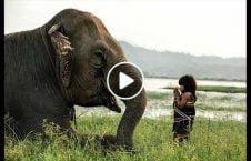 ویدیو دوستی فیل انسان 226x145 - ویدیو/ دوستی فیل با انسان