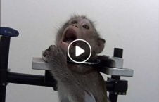 ویدیو زجر حیوانات کمپنی جرمنی 226x145 - ویدیو/ زجردادن حیوانات توسط یک کمپنی در جرمنی
