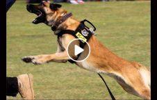 ویدیو سگ ۲۰ هزار دالر ولسی جرگه 226x145 - ویدیو/ درخواست خرید سگ ۲۰ هزار دالری توسط نماینده ولسی جرگه