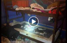 ویدیو شوکه طفل امریکا حیوانات 226x145 - ویدیو/ زنده گی شوکه کننده 3 طفل امریکایی با حیوانات