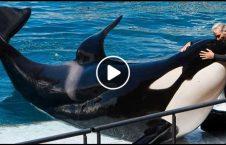 ویدیو/ نهنگی که می تواند حرف بزند