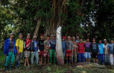 ماهی9 226x145 - تصاویر/ انقراض ماهی های غول پیکر در آمازون