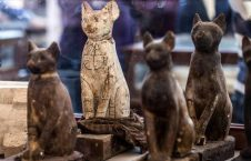 مومیایی حیوانات 8 226x145 - تصاویر/ نمایش دهها مومیایی حیوانات در مصر