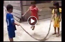ویدیو بازی اطفال شجاع مار 226x145 - ویدیو/ بازی اطفال شجاع با مار