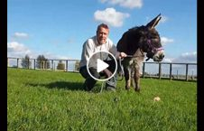 ویدیو جشن تولد خر 60 ساله 226x145 - ویدیو/ جشن تولد برای خر 60 ساله در بریتانیا
