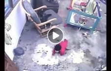 ویدیو نجات طفل توسط پشک 226x145 - ویدیو/ لحظه نجات یک طفل توسط پشک