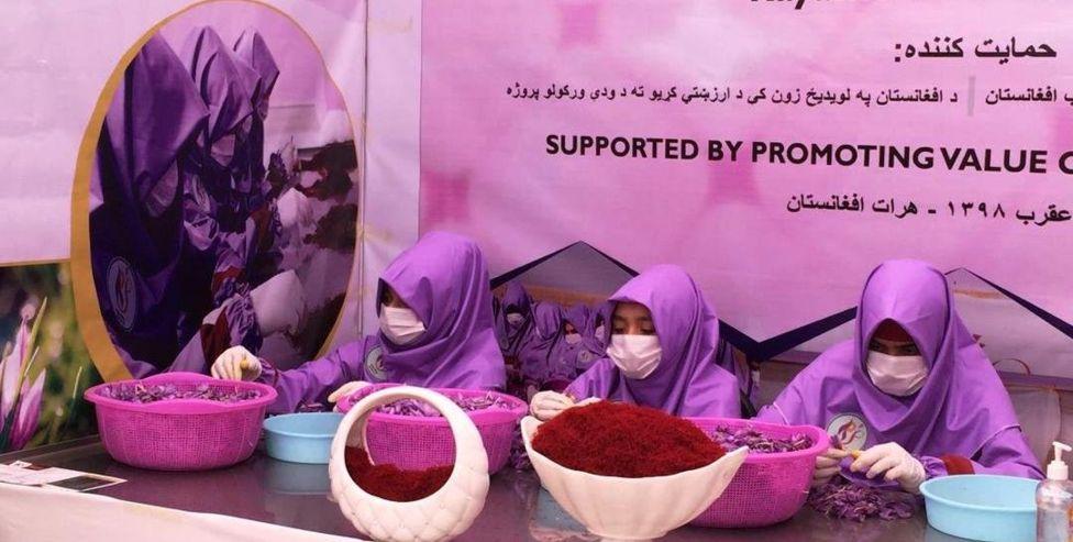 109719695 index - پنجمین جشنواره گل زعفران در ولایت هرات