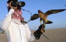 شکار 226x145 - حضور مشکوک شاهزاده قطری در ولایت فراه